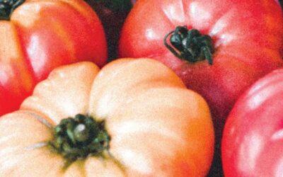 6 raisons au boom de la cuisine en France